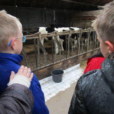 Waar komt de melk vandaan?