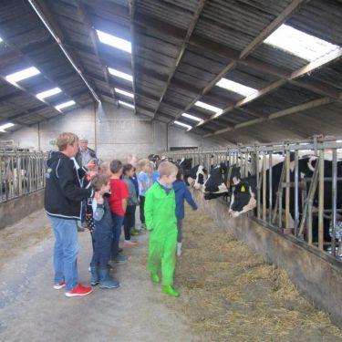 Melk, van koe naar pak